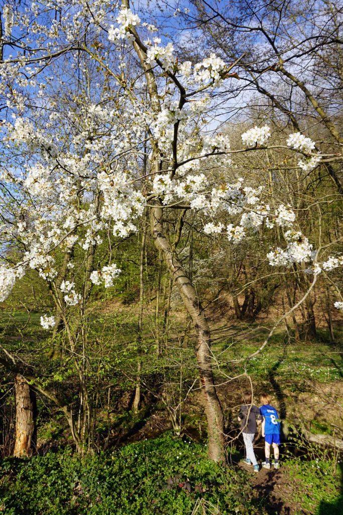 Ausflugtipps in die Natur: Frühling am Liederbach in Kelkheim