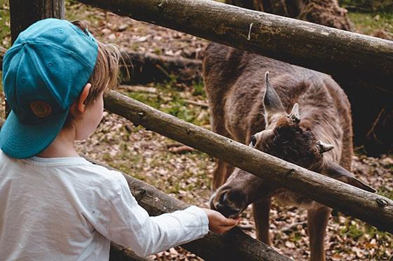 Kind füttert Tier Wildgehege