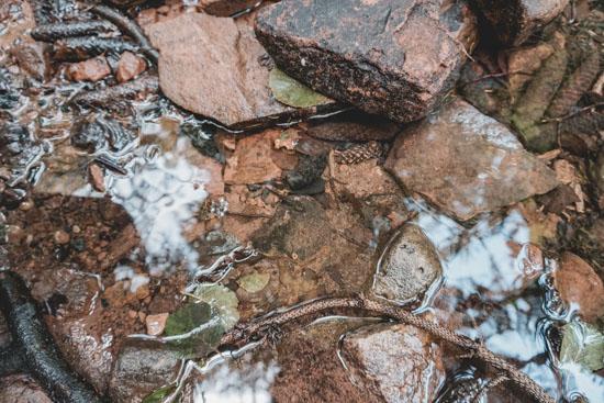 Bach mit Salamander