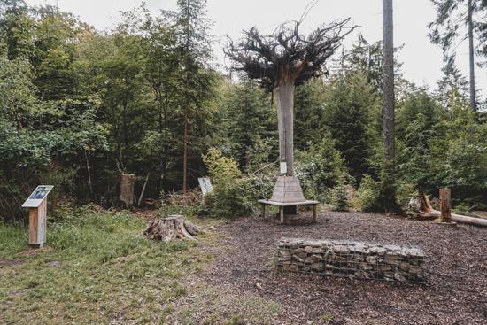 Baum steht Kopf in Bingen am Rhein