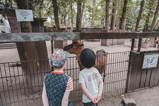 Kinder schauen sich die Ziegen im Kobelt Zoo an
