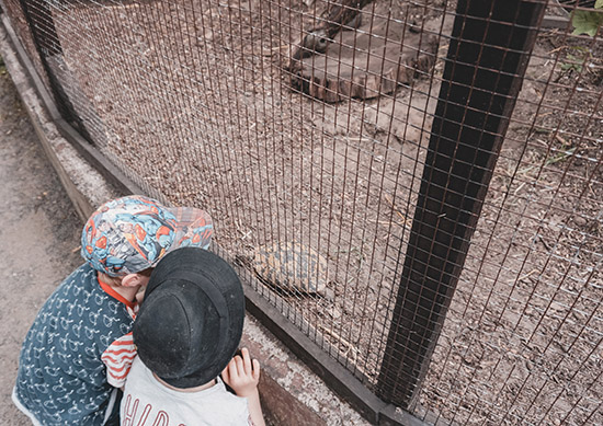 Patenschaft Landschildkröte