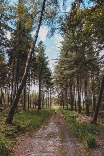 Waldwanderung Hochtaunus