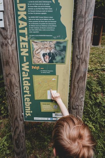 Wildkatzen Lehrpfad Ausflugsziel Hochtaunus