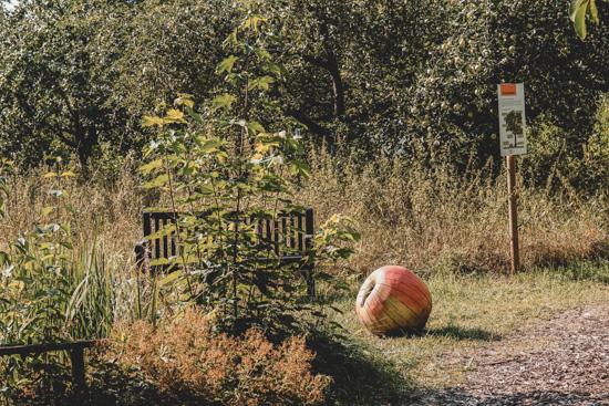 Apfel im Natur-Erlebnis-Garten Karben