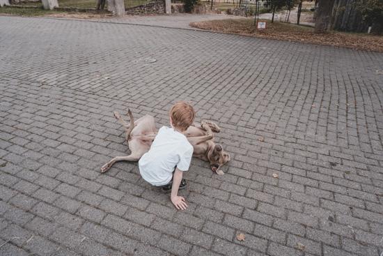 Kind streichelt Hofhund