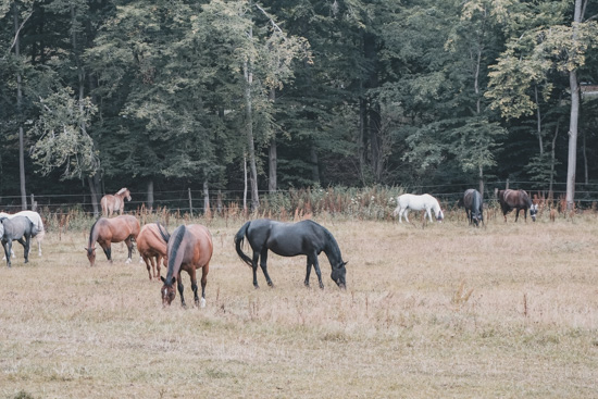 Pferde beim Wochenende in Bad Hersfeld