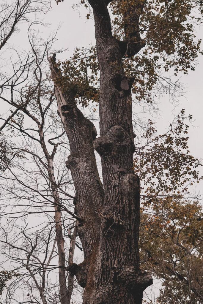 Fledermaus und Eule