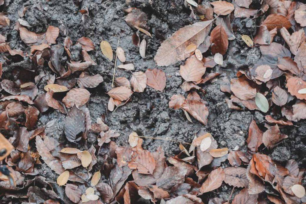 Spuren im Waldboden