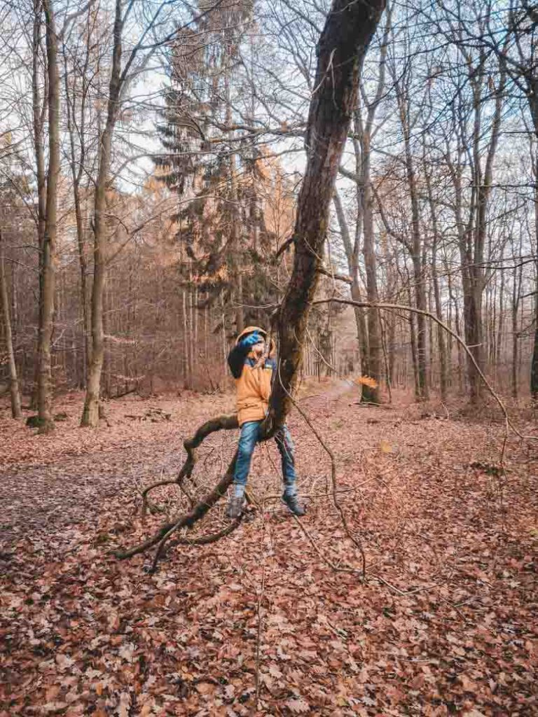 Kind auf Baum geklettert