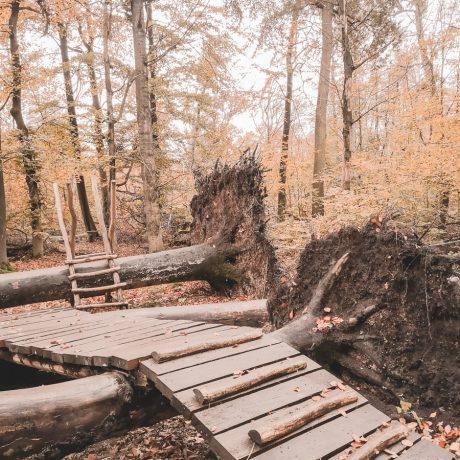Wege durch umgestürtzte Bäume