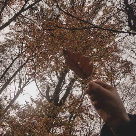 Kelkheim Wald und Blatt