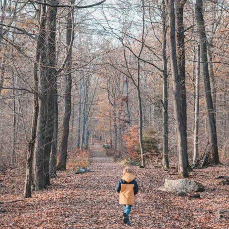 Ausflug in den Taunus mit Kindern